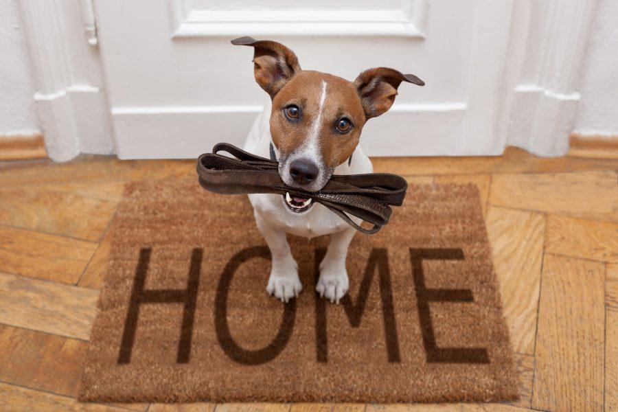 FHA Loans LH Lending
